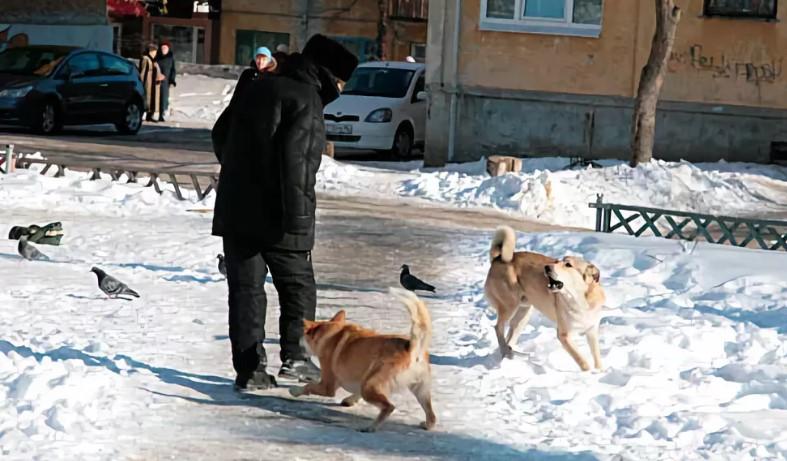 жалоба на бездомных собак